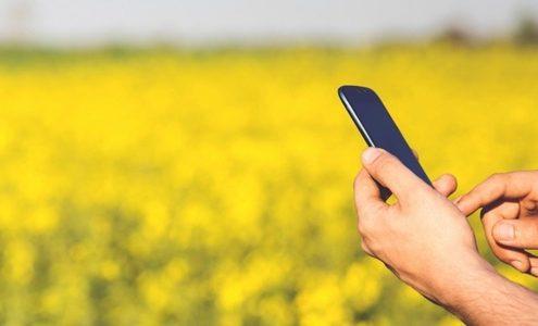 Hände halten Smartphone vor Rapsfeld